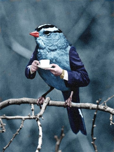 tea bird
